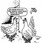 Ein Huhn kann sich nicht an den neuen Hahn gewöhnen